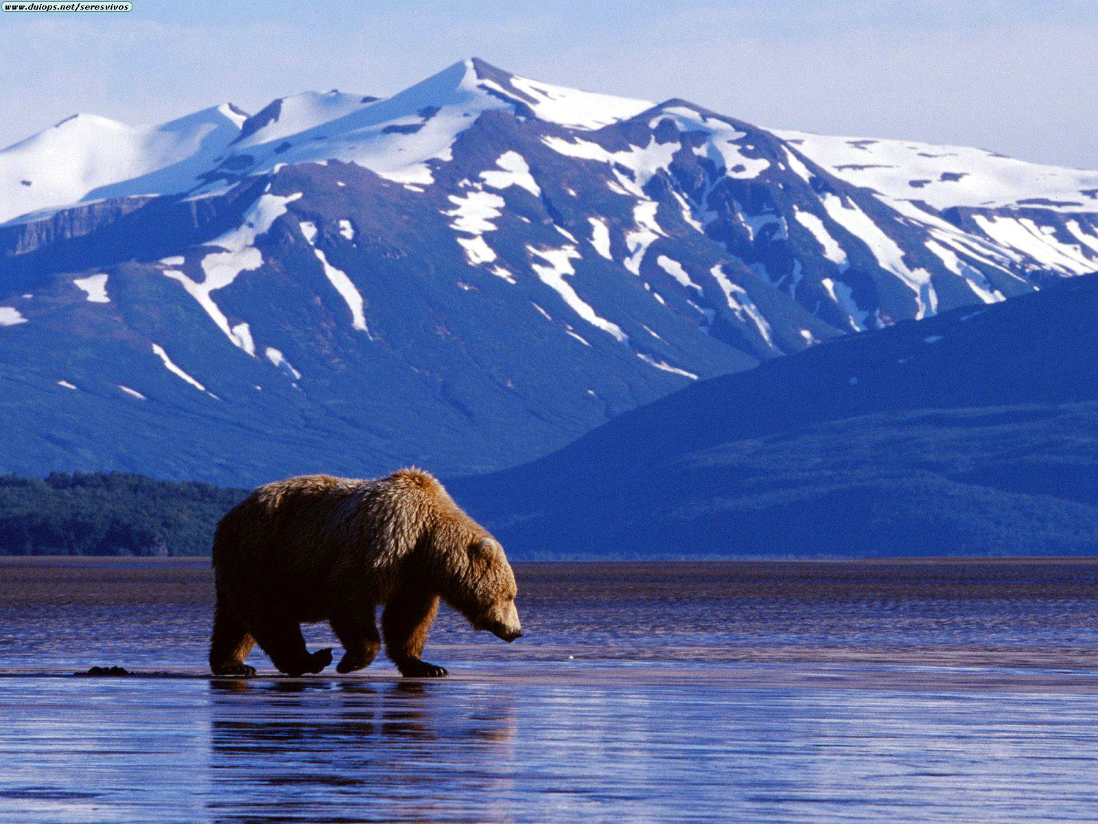 Perfect Alaska Vacations for Every Season