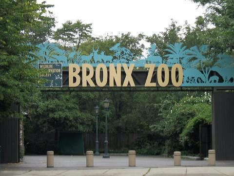 The Bronx Zoon in NYC