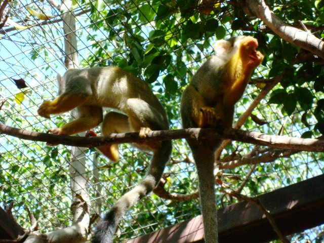 Los Cristianos  Monkey Park