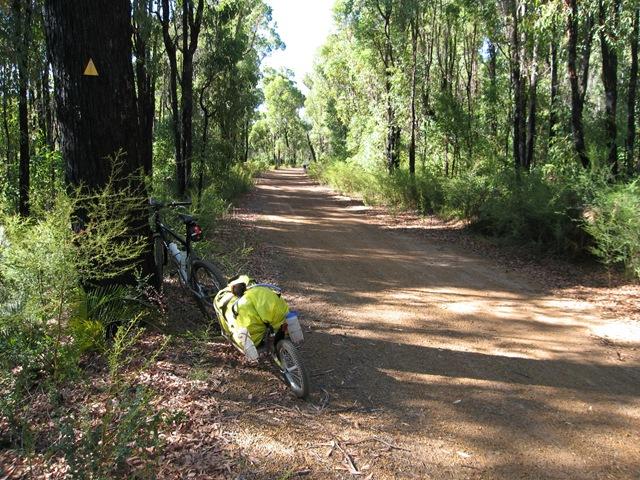 Munda Biddi Trail