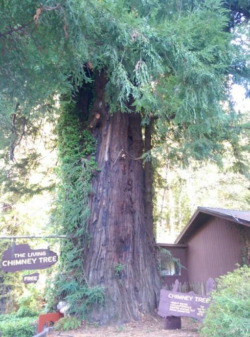 Living Chimney Tree