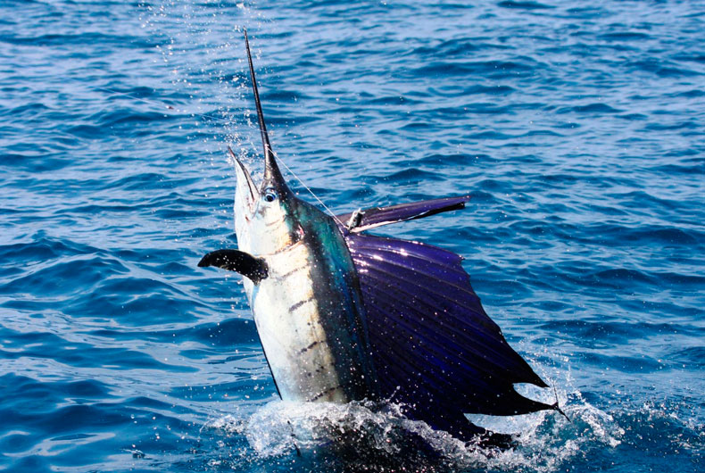 3 Things to Look For in a Costa Rican Charter Fishing Business