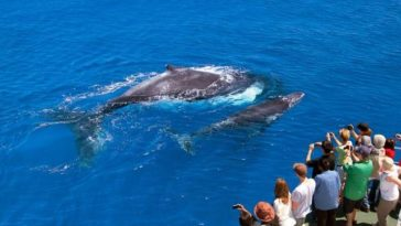 Most Popular Whale Watching Spots in Australia