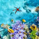 caribbean-underwater