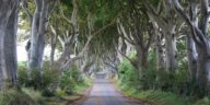 a-magical-tree-tunnel