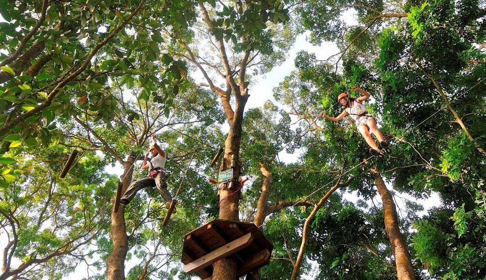 singapore Forest Adventure